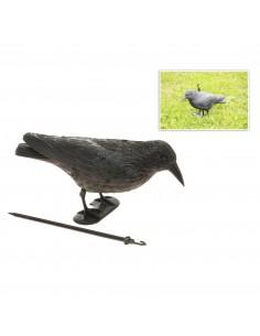 Cuervo anti-pajaros