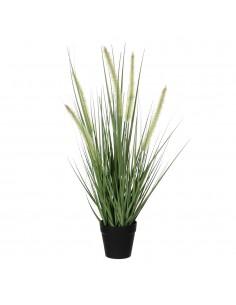 Dogtail hierba púrpura pvc