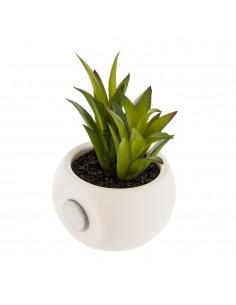 Mini plantas decorativas con iman modelos surtidos 6cm