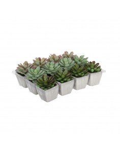 Cactus en maceta modelos surtidos 8.5cm