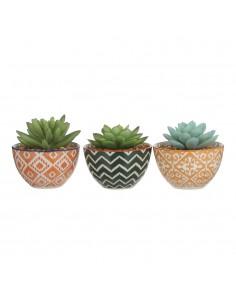 Planta cactus en macetero